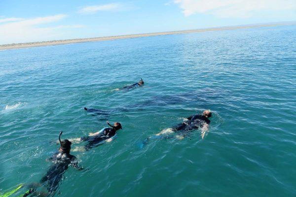 whale-sharks-3